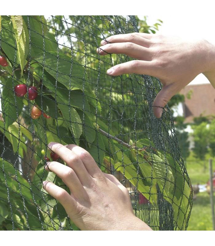 Pronet p pini res bauchery - Eloigner les oiseaux des arbres fruitiers ...