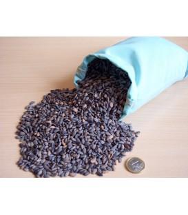 Pinus Pinaster / Graine Pin Maritime