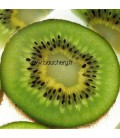 Actinidia - Kiwi Male