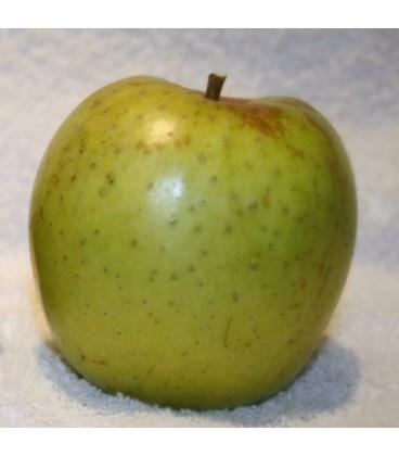 Pomme de l'Estre - Saint Germaine
