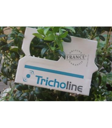 Diffuseur Tricholine buxus x25