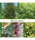 HAIE BRISE-VENT Kit de 25 mètres
