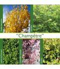 Haie Champetre Kit 25 M