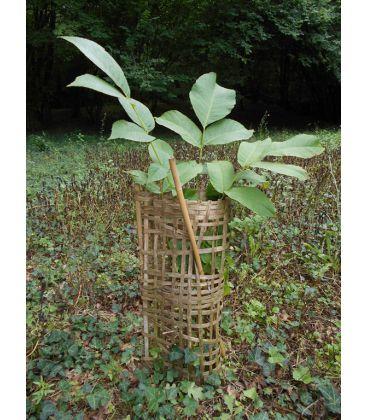 ECO PROTECT PLANT