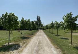 Plantation d'un arbre d'alignement