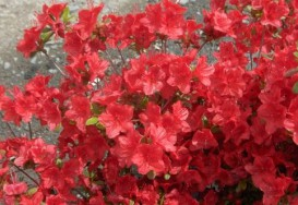 Jardiner en mars
