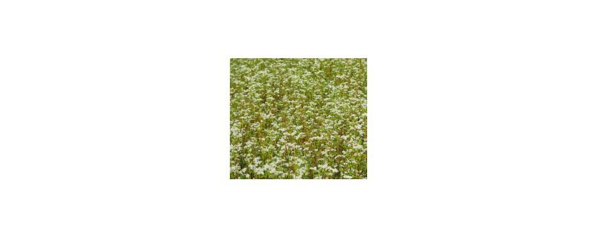 Travail du sol et maîtrise de la strate herbacée