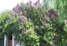 Jardiner en avril