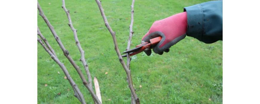 Comment tailler un fruitier