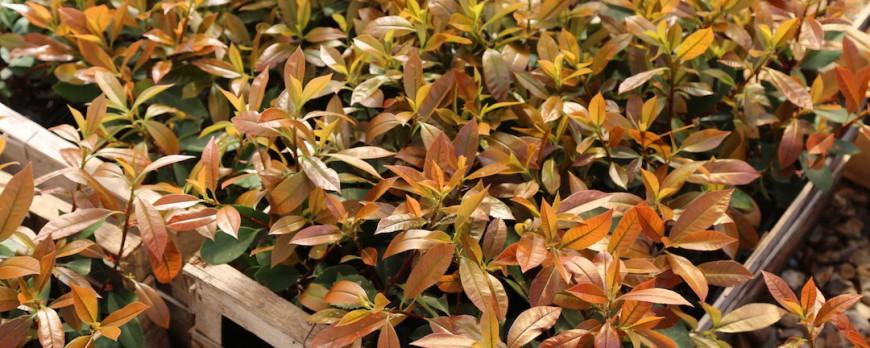 Guide des tailles et qualité des plants