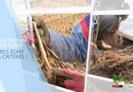 Une saison chez Bauchery, épisode 6 : Critères de qualité d'un jeune plant